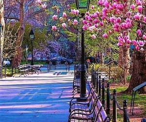 flowers, spring, and city image
