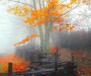 autumn, fog, and leaves image