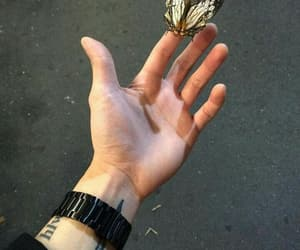 butterfly, grunge, and hand image