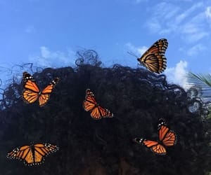 butterfly, hair, and aesthetic image