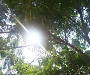 folhas, luz, and galhos image