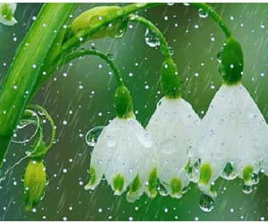 flowers, snowdrops, and gif image