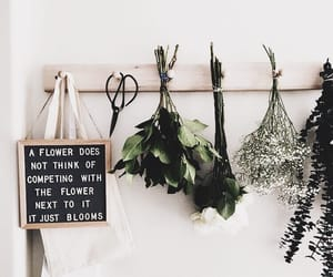 flowers, quotes, and plants image