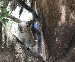 backyard, squirrel, and posing image