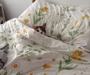 cat, bed, and flowers image