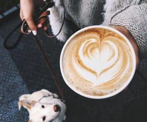 coffee, dog, and animal image