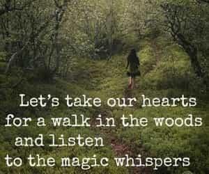 magic, nature, and trees image