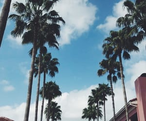blue, trees, and tumblr image