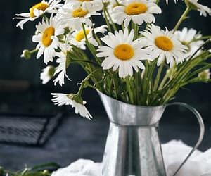 gif and flowers image