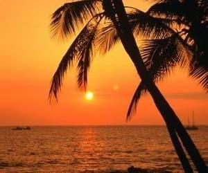 ocean, palme, and sonnenuntergang image