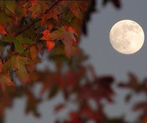 autumn, fall, and moon image