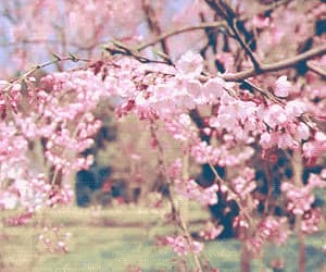 flowers, pink, and gif image