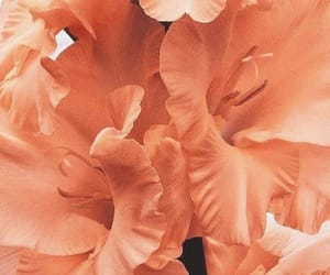 flowers, peach, and theme image
