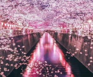 amazing, beautiful, and japan image