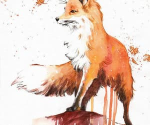 animal, little fox, and red image