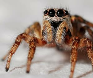 lovly, cute, and spider image