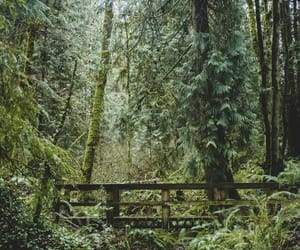 article, love, and forest image