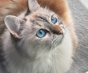 beautiful, kittie, and kitty image
