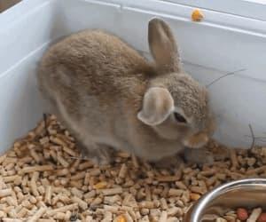 bunny, cute, and gif image