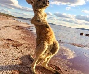 animal, australia, and beach image