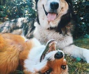 dog, animal, and fox image