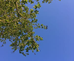 blue, clear sky, and nature image