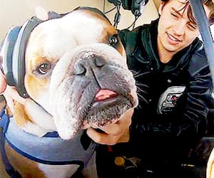 actor, dog, and cole sprouse image
