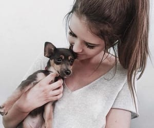 adorable, dogs, and makeup image