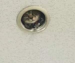 cat, fun, and kitty image