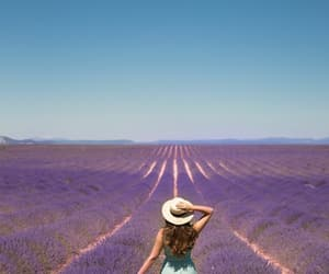 lavender, france, and purple image