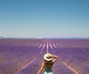 lavender, france, and purple image