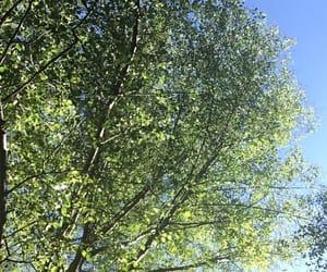 arbol, hojas, and verde image