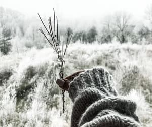 cold, photography, and hand image