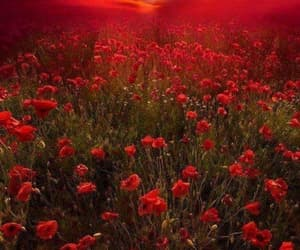 coquelicot, landscape, and poppy image