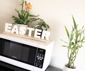 easter, kitchen, and plants image