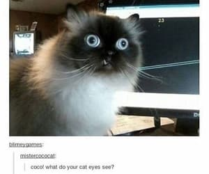cats, eyes, and funny image