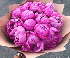 pink, peonies, and bouquet image
