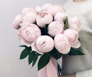 rose, girl, and pink image