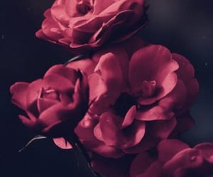 flowers, red, and background image