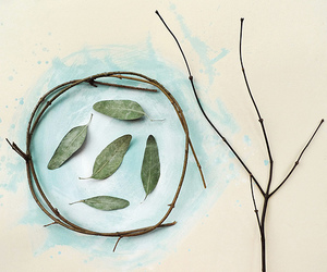 branch, paint, and eucalyptus image