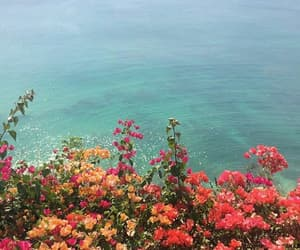 flowers, ocean, and sea image