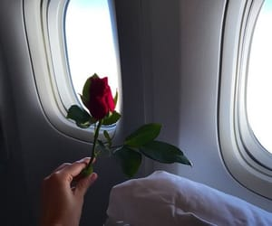 airplane, flower, and girl image