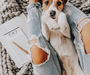 animal, dog, and jeans image