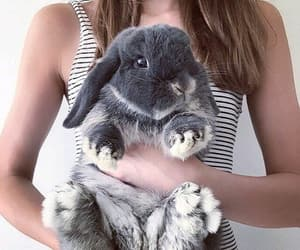 animals, bunny, and hug image