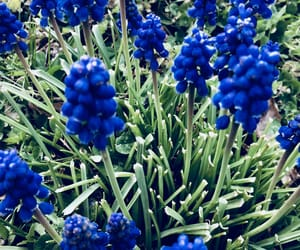 blue, color, and flower image