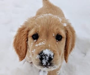 adorable, snow, and cute image