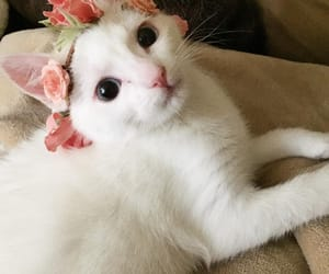 adorable, cat, and flower crown image