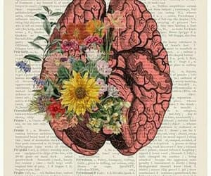 book, brain, and flowers image