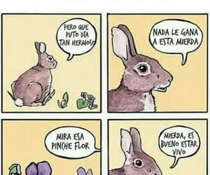conejo, flor, and funny image