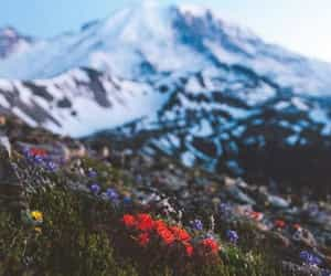 flowers, mountain, and mountians image
